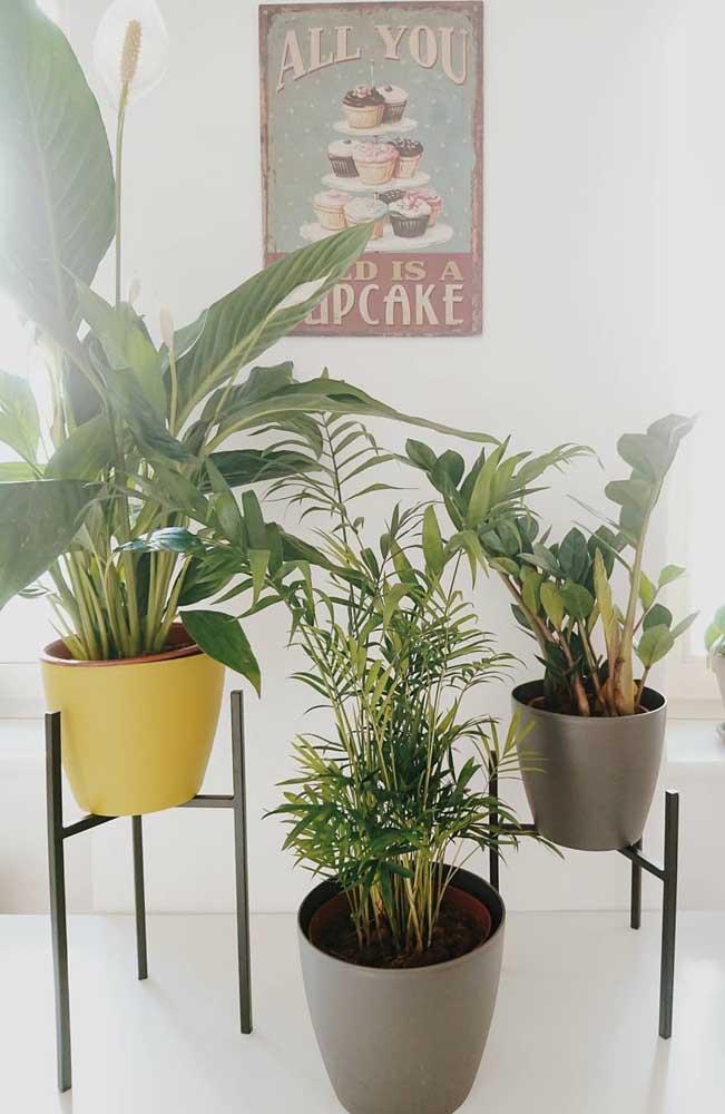 Cantinho de plantas tropicais por aqui