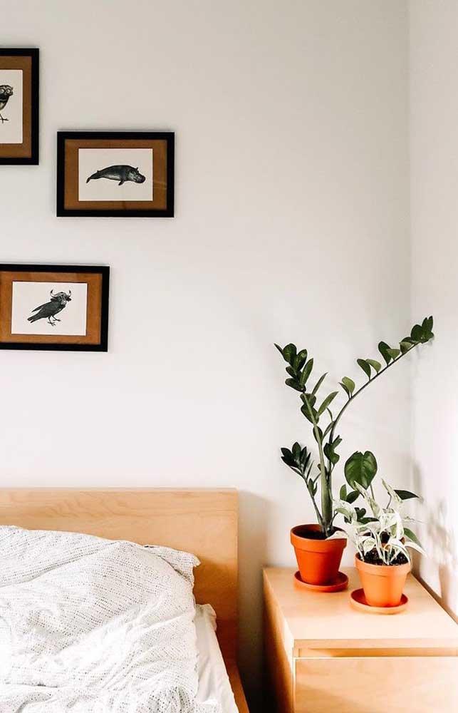 Decorações minimalistas se harmonizam muito bem com a beleza da zamioculcas
