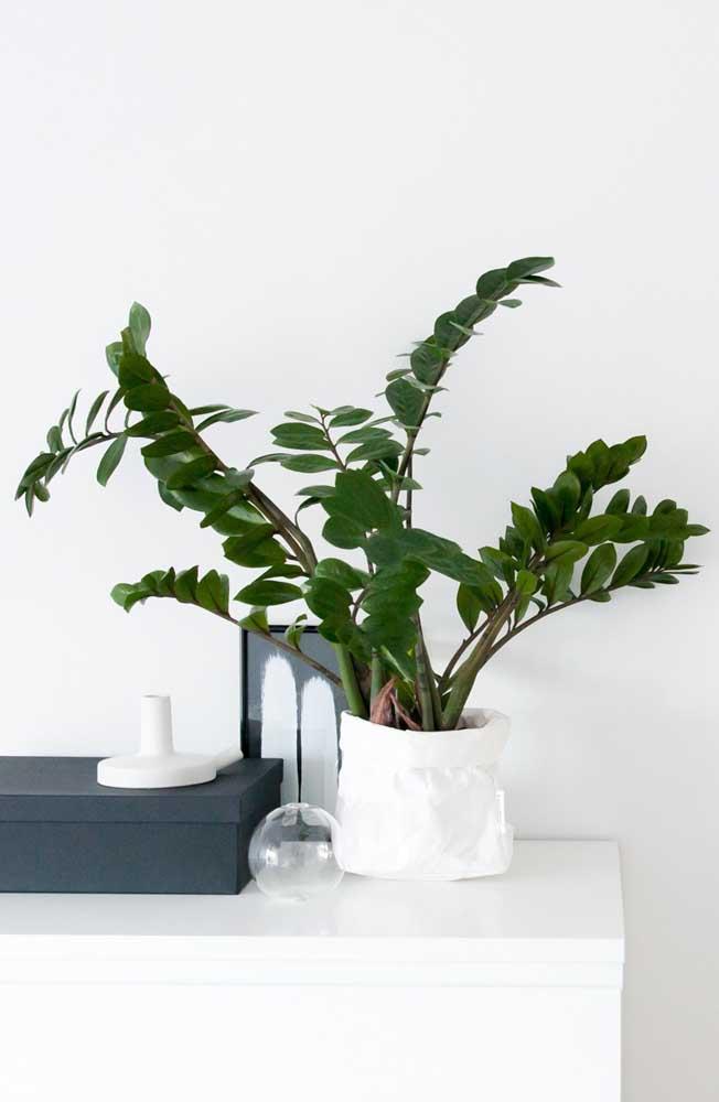 Lembre-se que a zamioculcas é uma planta de crescimento lento, por isso mesmo, não exagere na adubação