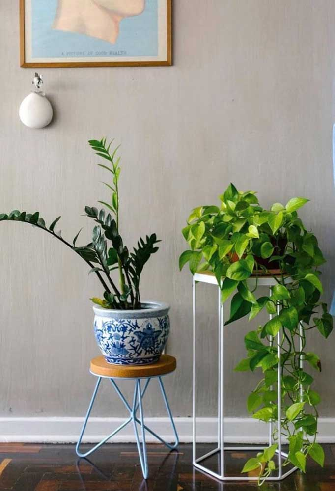 Jiboia e zamioculcas: as plantas do momento