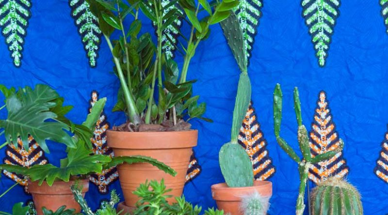 Zamioculca: cuidados com a planta, como plantar e ideias de decoração