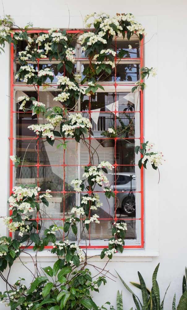 Aproveite a presença da grade na janela para emoldurá-la com flores, olha como fica lindo!