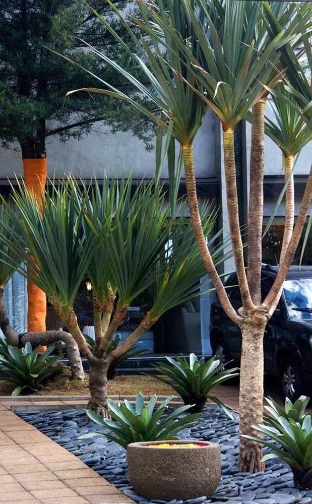 Jardim rústico com pedras seixo cobrindo toda a extensão; as plantas de clima árido contribuem com o visual paisagístico