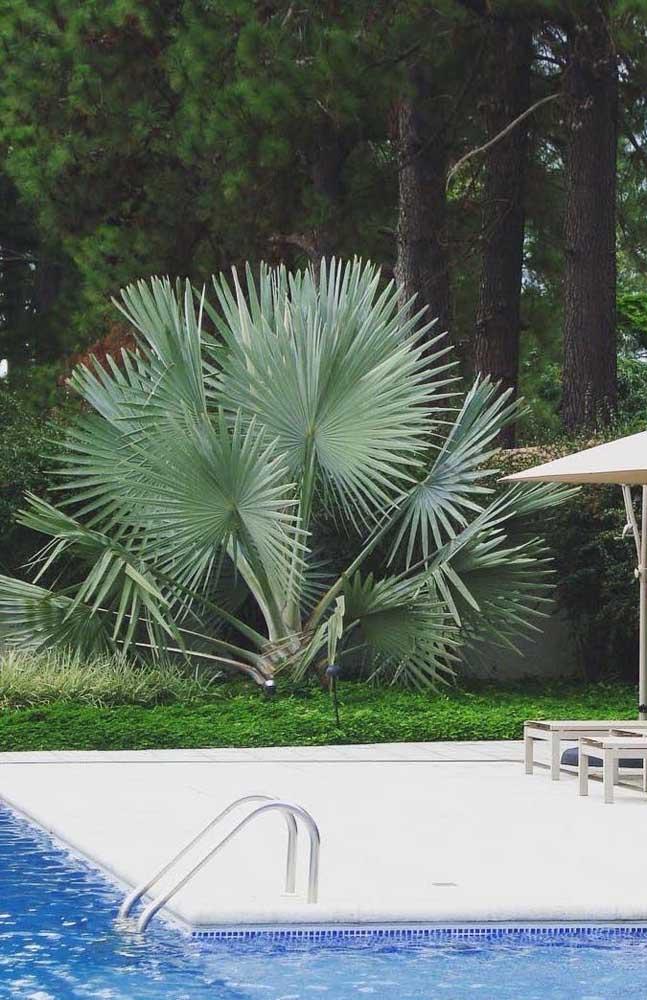 Você conhece todos os tipos de palmeiras?