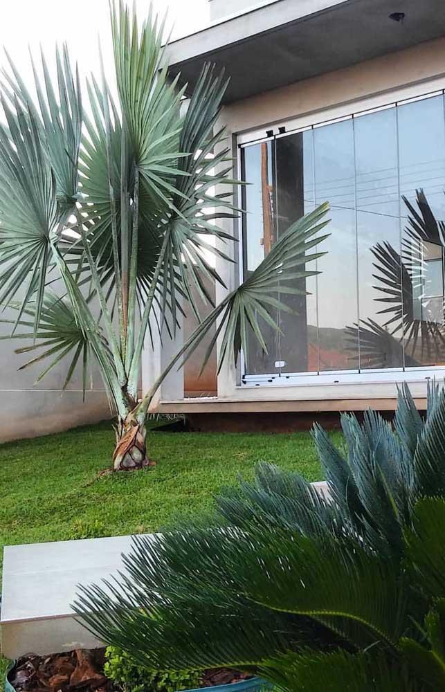 Saiba que existem alguns tipos de palmeiras para jardins residenciais.