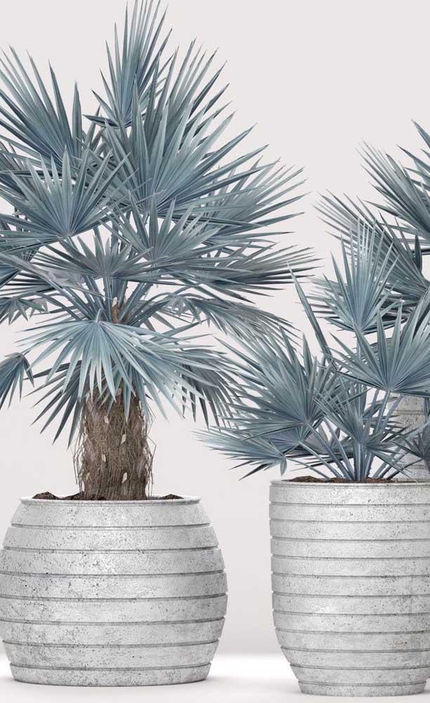 E outras palmeiras para ambientes internos.