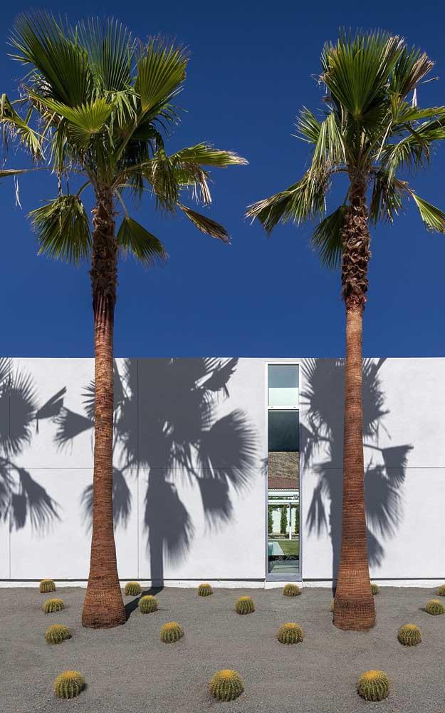 Mas no caso da palmeira imperial, você só consegue cultivá-la fora de casa por conta do seu tamanho.
