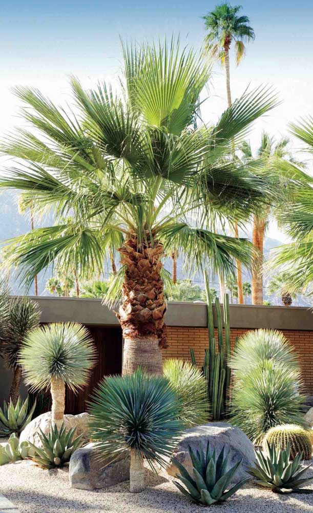Que tal decorar seu jardim com a palmeira washingtonia?