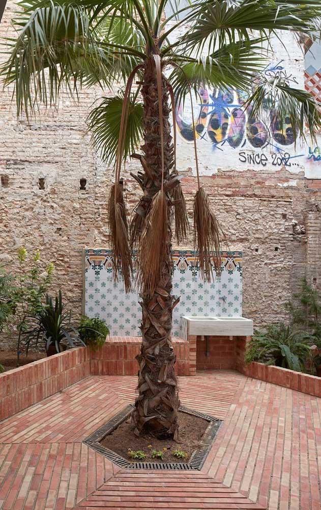 Você já ouviu falar na palmeira leque? Ela pode ser usada tanto em ambientes internos quanto externos.