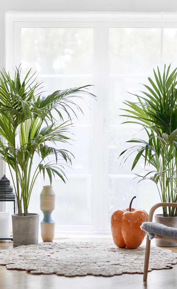 Existem alguns tipos de palmeiras para vaso que são específicos, pois não são todas que podem ser cultivadas na sombra.