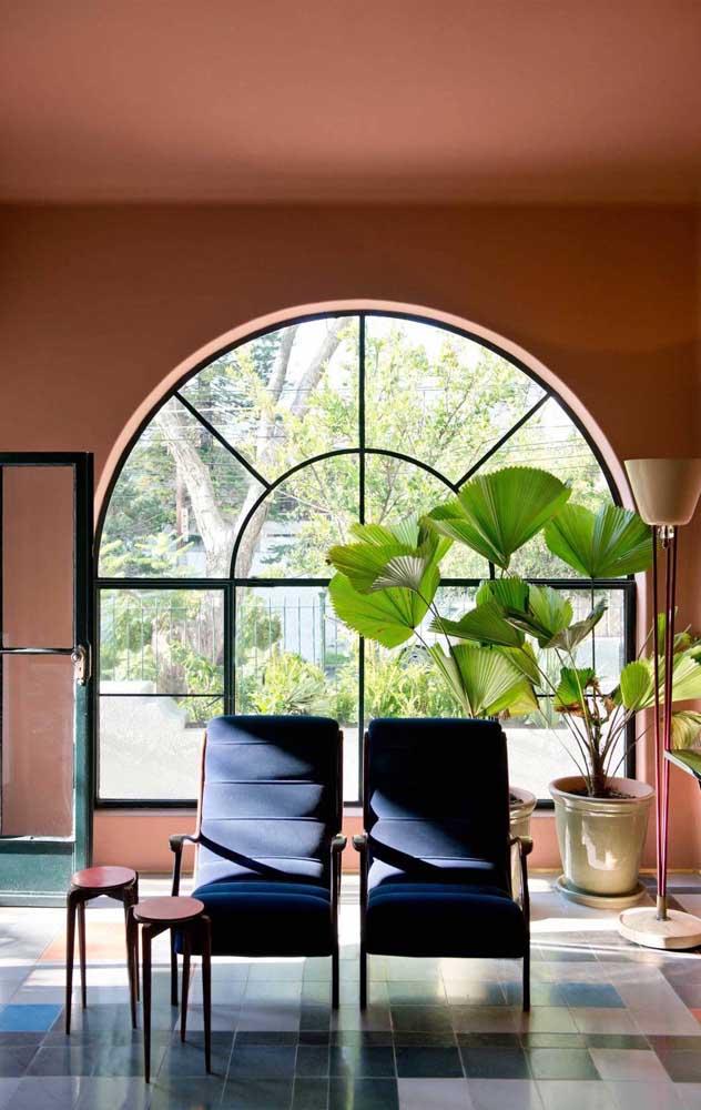 Agora a palmeira leque na decoração interna de um ambiente.