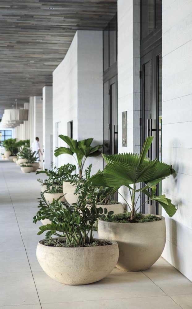Veja que cenário lindo com esses vasos de palmeiras.