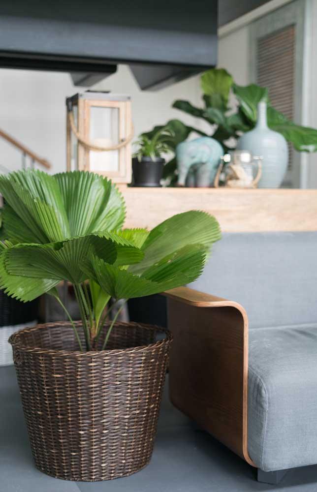 A palmeira não precisa ser uma planta gigante para decorar a sua casa.