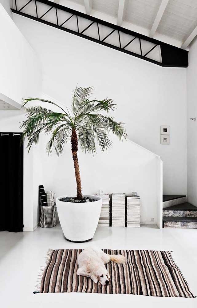 Basta usar a criatividade e a prática da jardinagem para criar um belo ambiente com a palmeira.