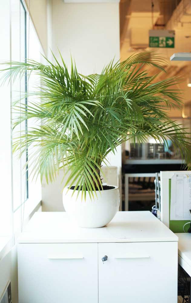 Olha que vasinho de palmeira mais fofo para decorar sua casa.
