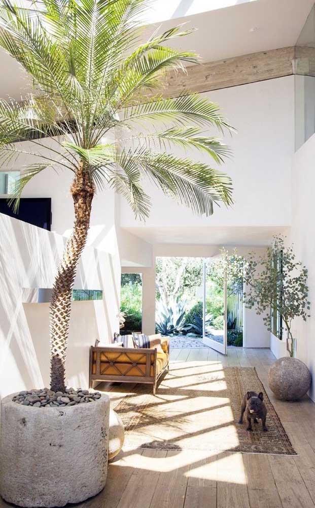 Escolha a palmeira mais apropriada para cada ambiente.