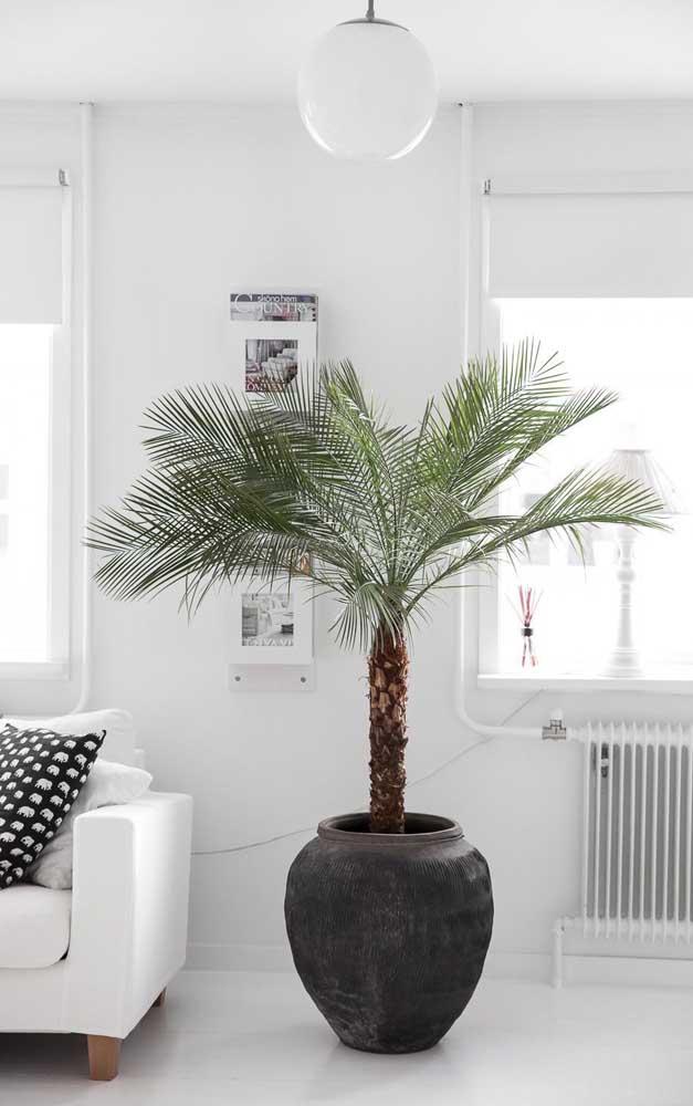 Uma palmeira pode ser o grande destaque de uma decoração mais clean.