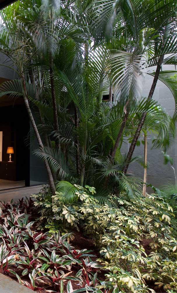 Que tal fazer um belo jardim na sua casa com lindas palmeiras?