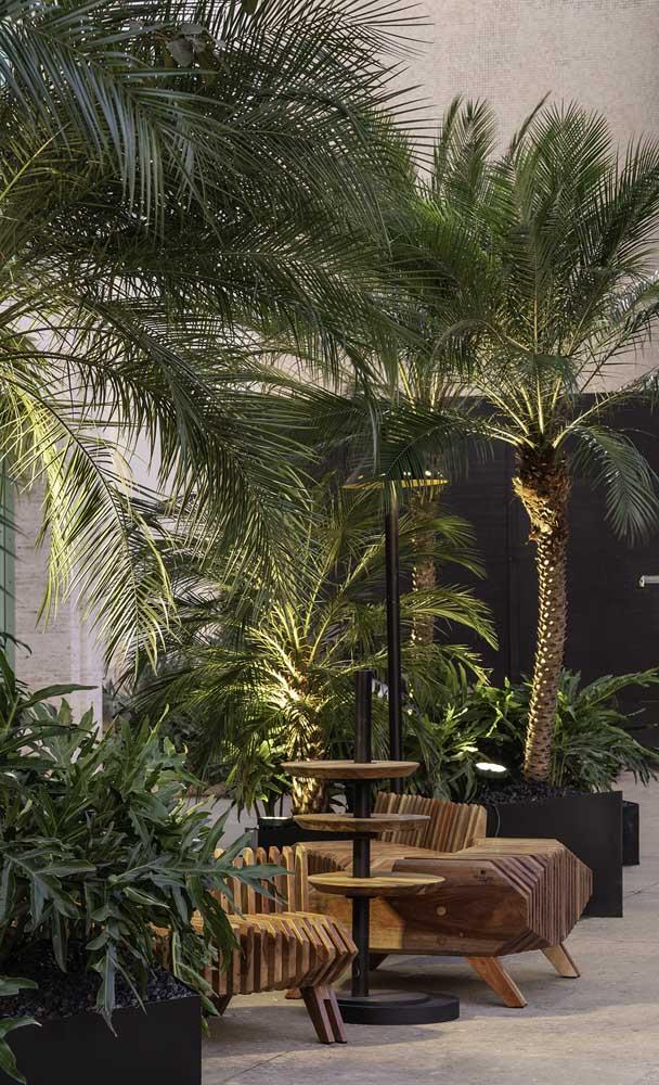 Você sabe quais são os tipos de palmeiras para jardim?