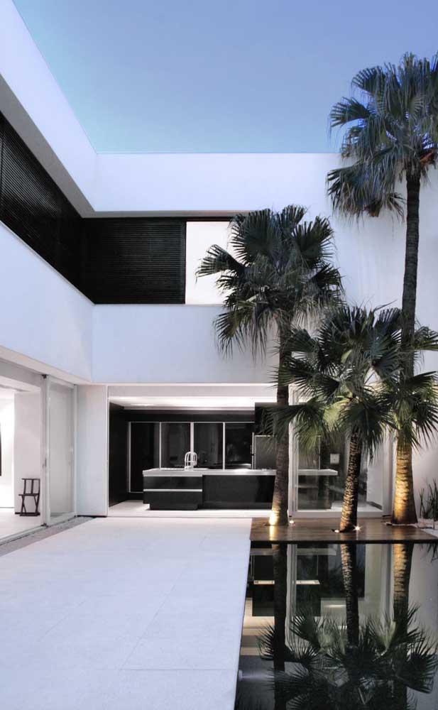 Quem tem áreas externas amplas, pode apostar em palmeiras longas e chamativas.