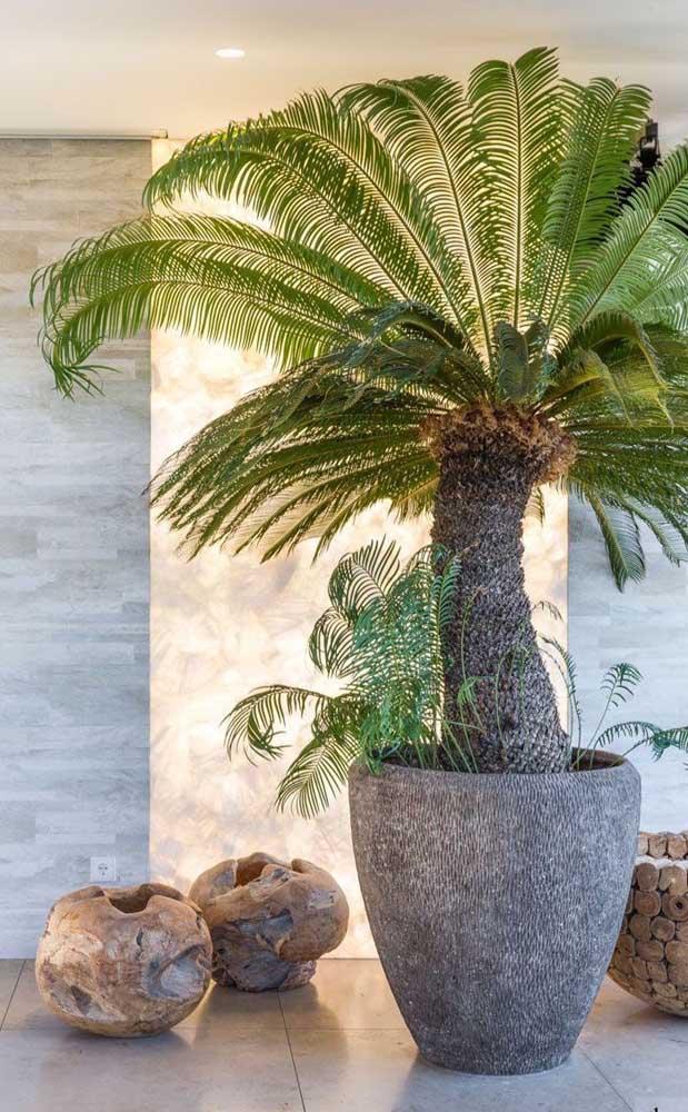 Que tal colocar uma palmeira fênix ou mais conhecida como mini palmeira em um vaso para decorar sua casa?