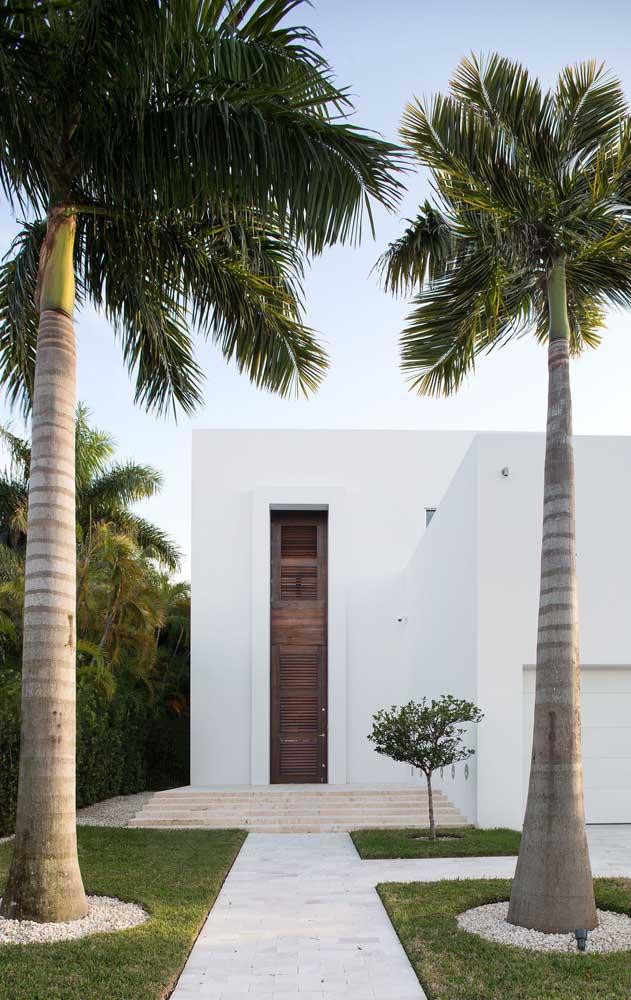 Alguns tipos de palmeiras são mais indicadas para a entrada da residência.