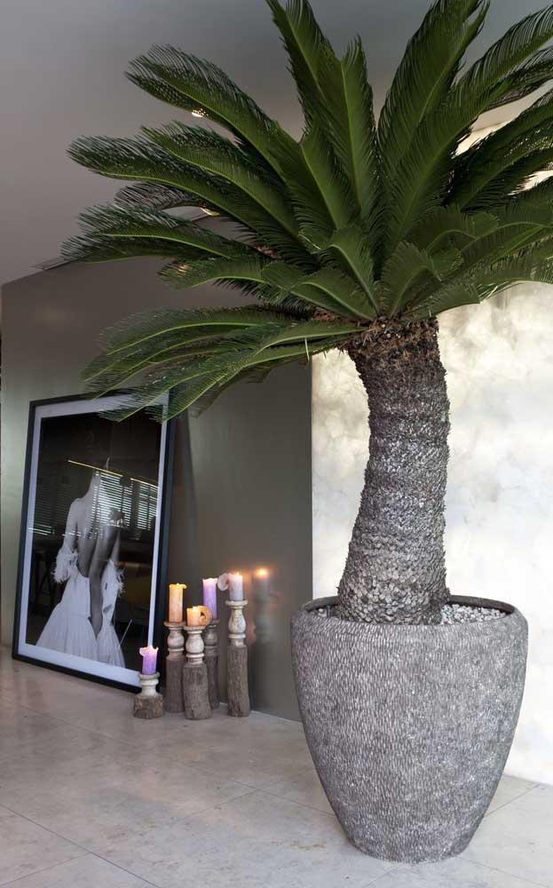 Combine o vaso de palmeira com o restante da decoração da casa.