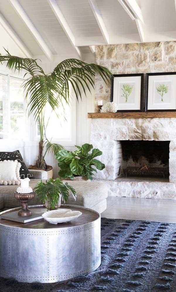 Você pode escolher vários tipos de palmeiras para colocar na parte interna da sua casa.