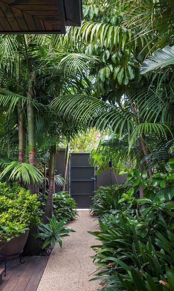 Que tal uma floresta cheia de palmeiras na sua casa?