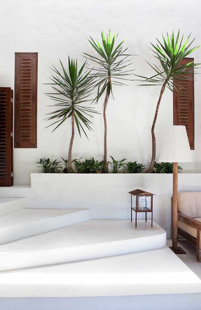 Prepare um cantinho especial para colocar as palmeiras na parte externa da casa.
