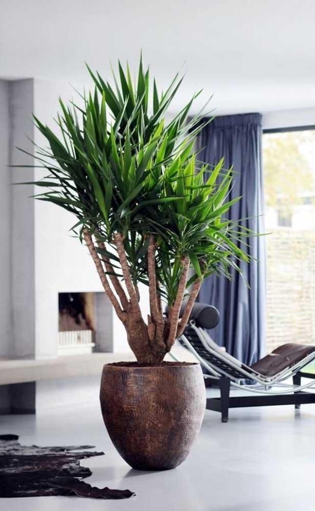 Você acredita que essa planta é uma palmeira? Saiba que existem várias espécies diferentes.