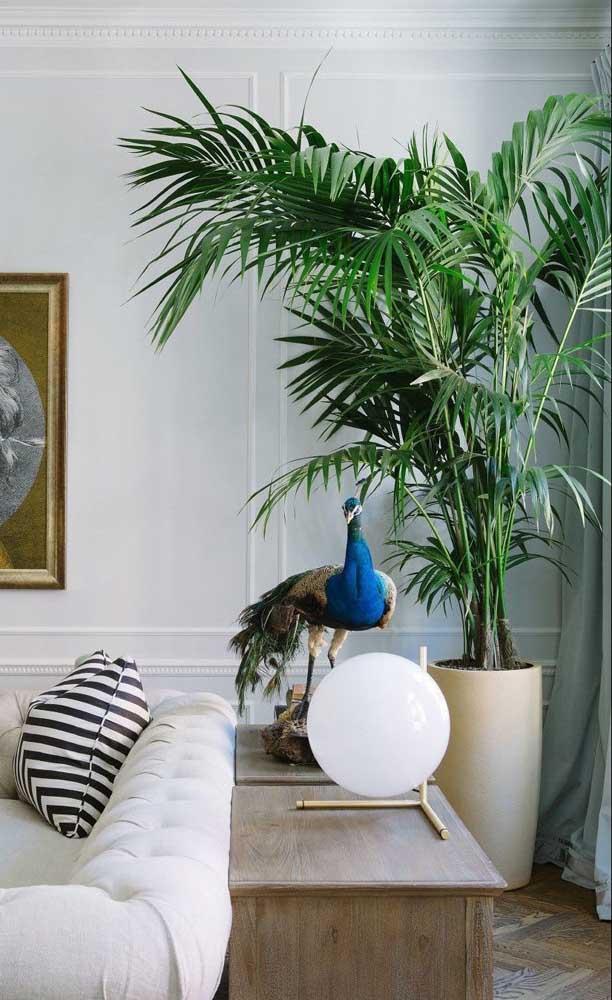 Uma planta dentro de casa proporciona mais contato com a natureza, além de deixar o ambiente mais lindo.