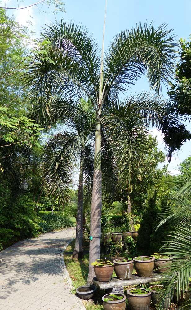 Você pode colocar duas belas palmeiras na entrada da sua casa.