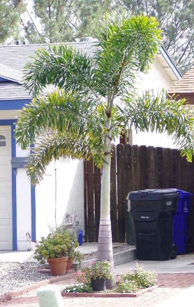 Mas você também pode usar uma simples palmeira para decorar a área externa.