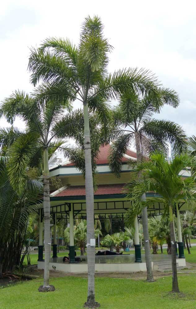 Que tal apostar em um conjunto de palmeiras para deixar a área externa mais linda?