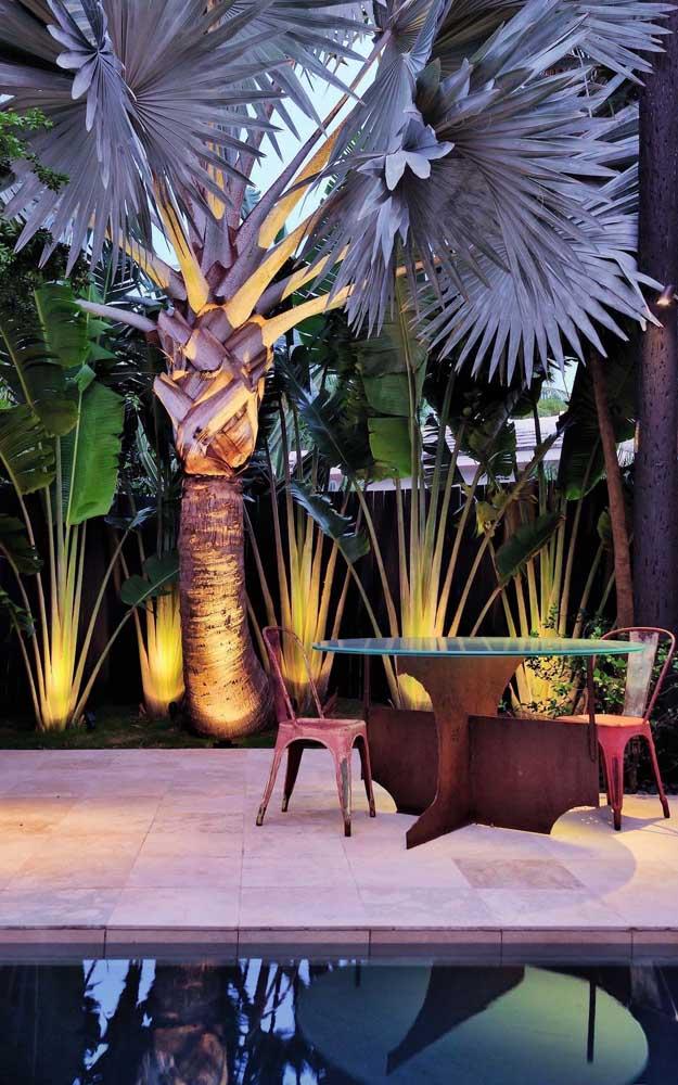 A palmeira azul tem essa cor linda que destaca qualquer jardim.