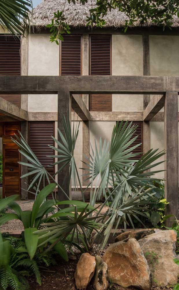 Já sabe qual tipo de palmeira você vai usar na decoração do seu jardim?