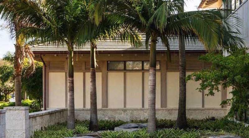 Tipos de palmeiras: quais são? espécies e fotos para você conferir