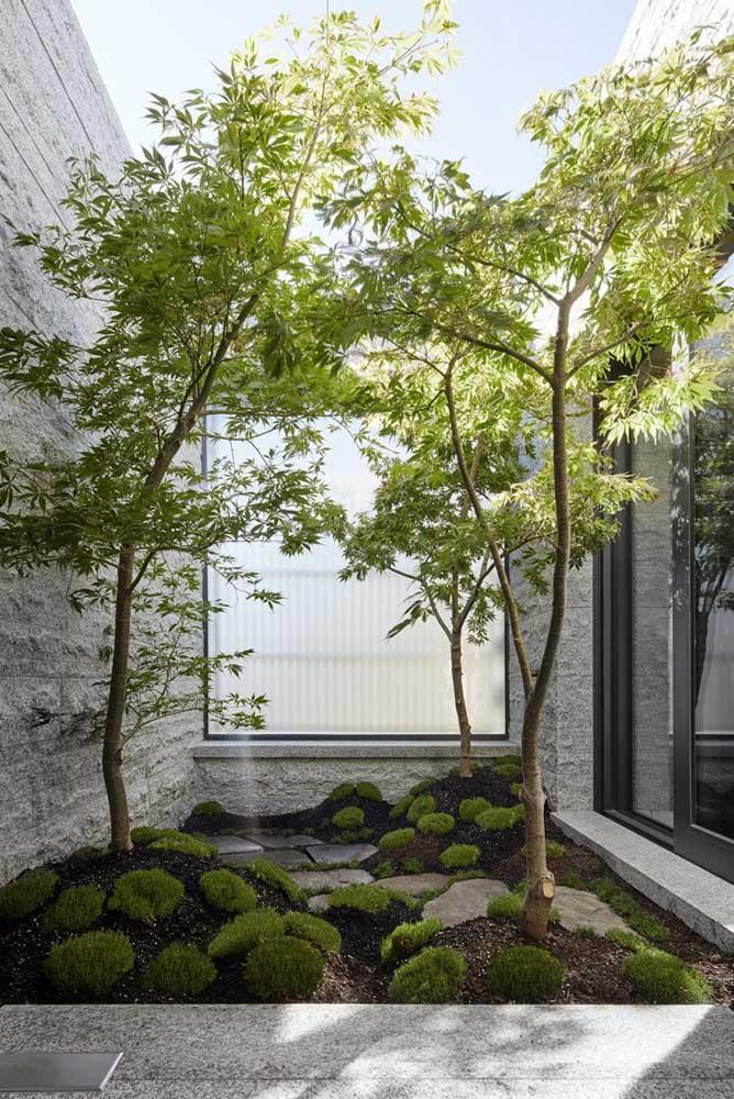 Mesmo em casa você não precisa fazer o jardim japonês apenas com plantas baixas.