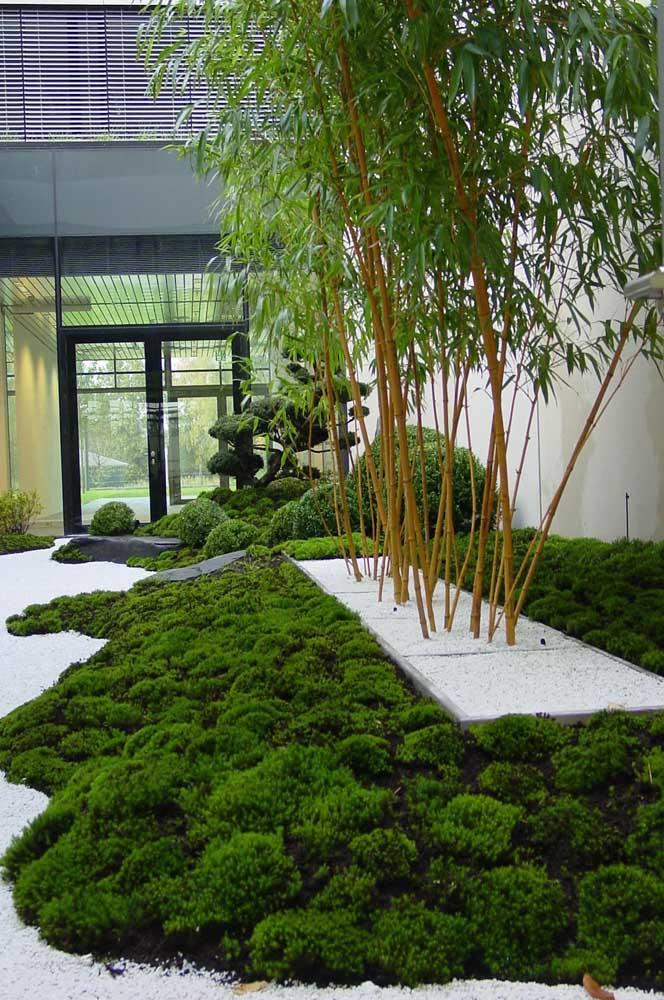 Jardim moderno com bambus no canteiro central e forração de grama ao redor