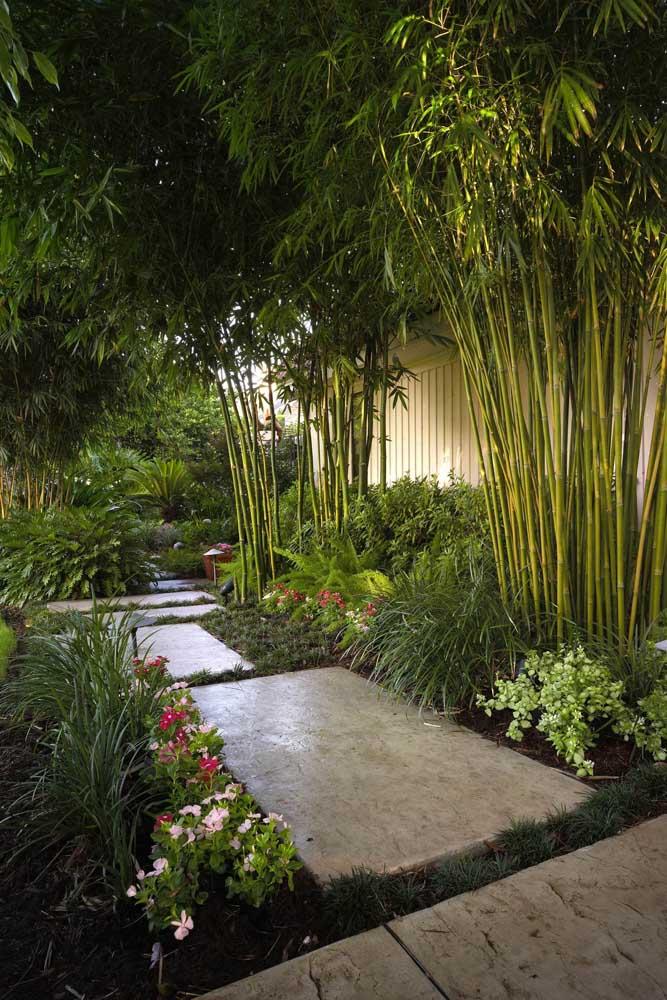 Jardim tropical, cheio de vida e cores para adornar a entrada da casa