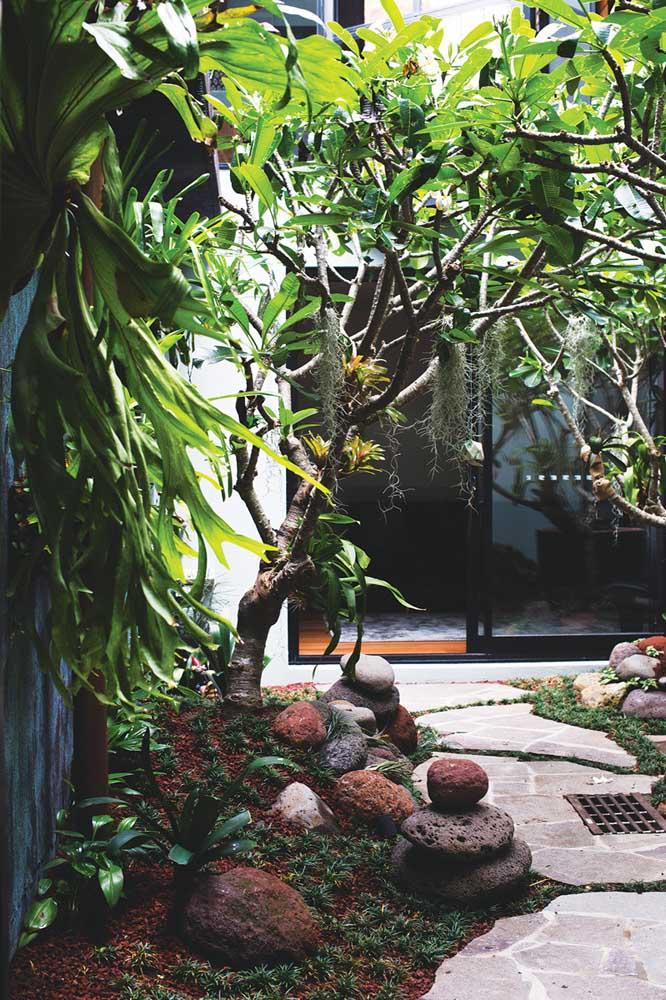 Decoração de jardim pequeno com plantas tropicais, entre elas as bromélias e chifres de veado