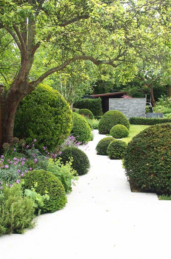 Decoração de jardim clássico com plantas que podem se tornar uma verdadeira escultura