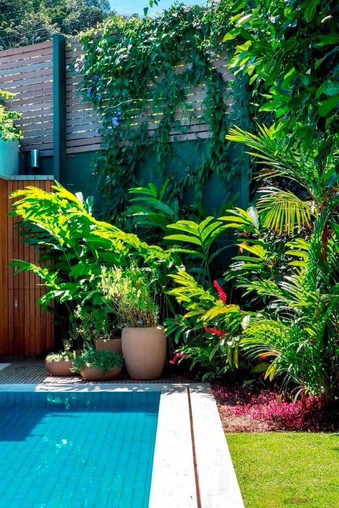Decoração de jardim tropical cercando a piscina