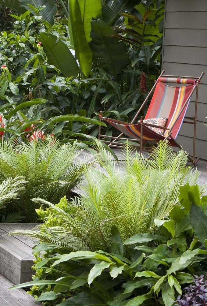 Jardim tropical banhado pelo sol!