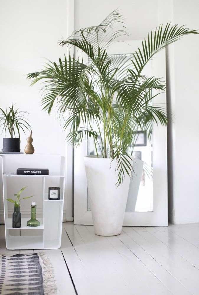 Um vaso elegante para a ráfis combinando com a estética da sala