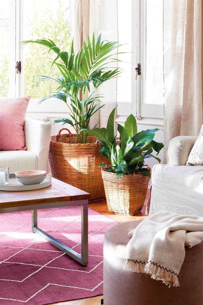 O cesto de vime recebeu lindamente a palmeira ráfia e sua companheira, a pacová