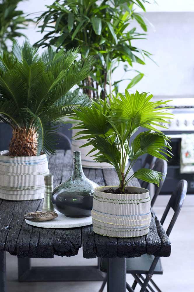 Mini palmeira ráfia na decoração da mesa de jantar