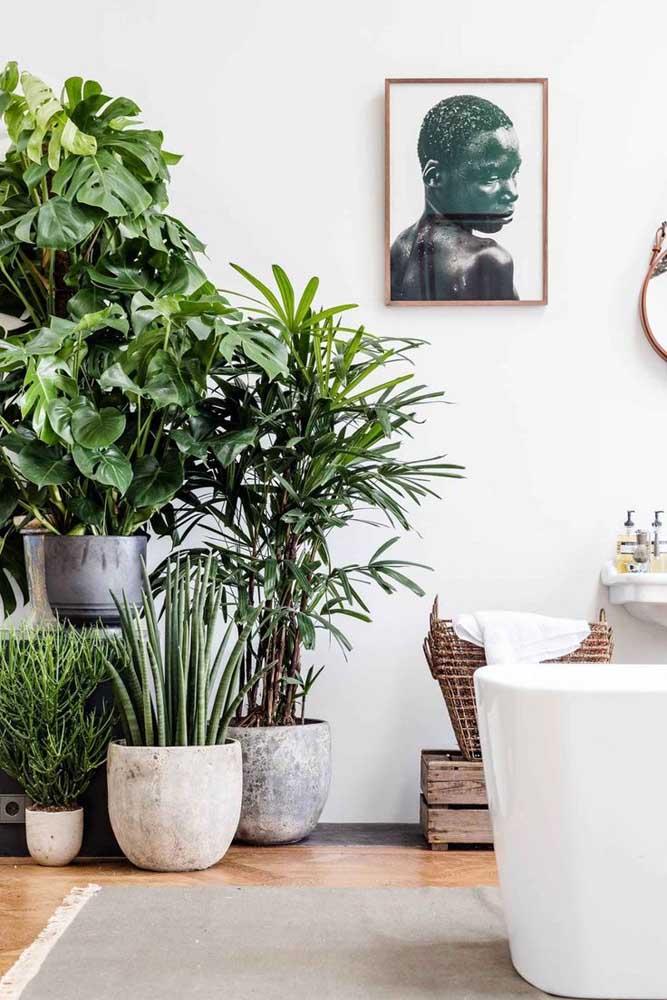 Urban jungle na sala! Com direito a palmeira ráfia e costela de adão