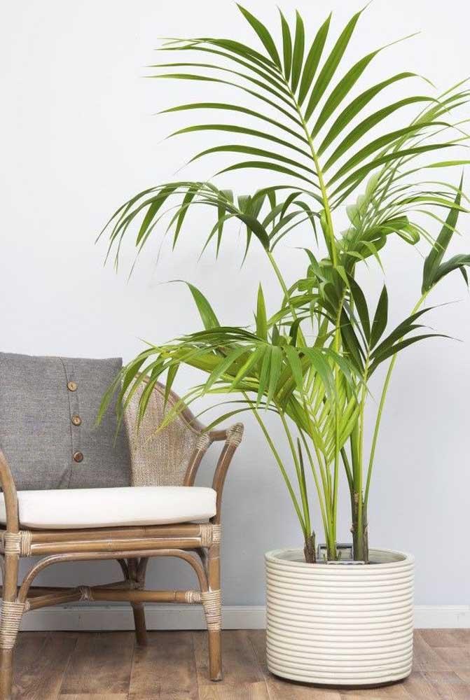 """A palmeira ráfia é uma ótima """"preenchedora"""" de ambientes"""